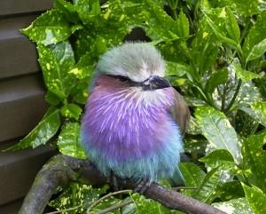 Bird Watching Blinds